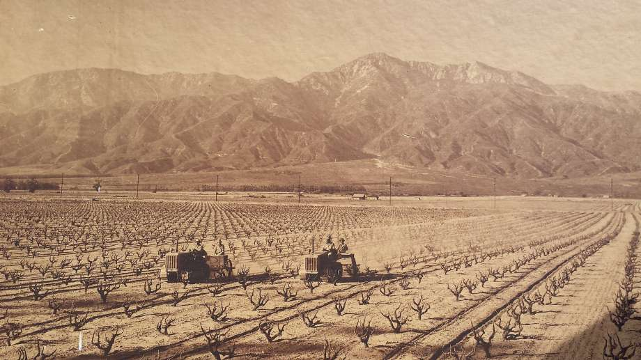 Cucamonga Valley Circa 1940 Photo Credit: Paul Hofer III